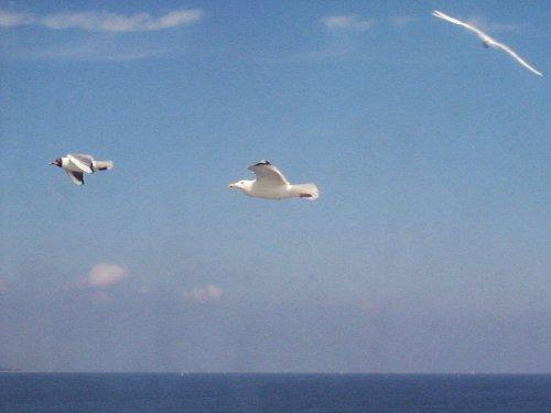 Gull, Jonathan L.
